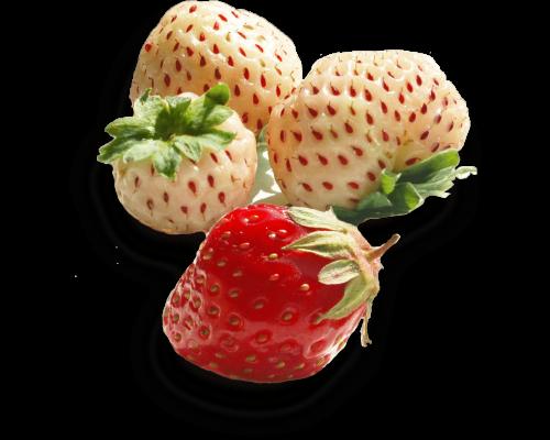 Ananas-Erdbeerden, Juni 2016 Holland (45)KW23-24-2016