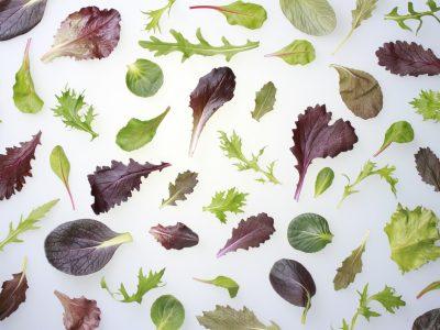 Baby_Leaf_Mischung_250g_Küchenfertige_Produkte
